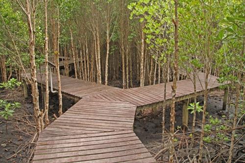 Магровые заросли и избушка на куриных ножках в джунглях Таиланда