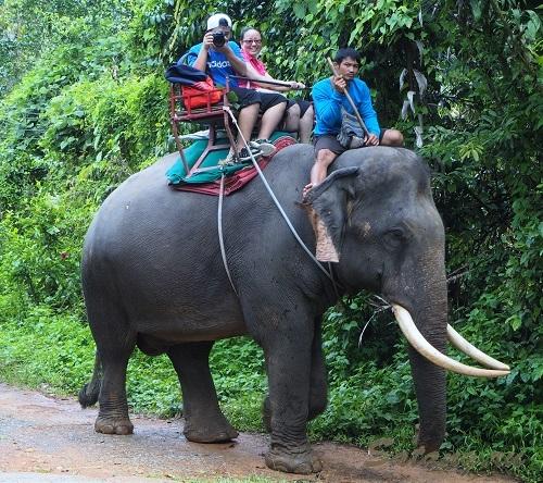 Слоны Ко Чанг - это не просто животные!