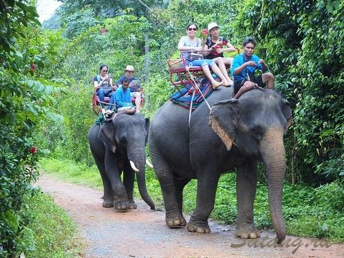 Слоны треккинг Ко Чанг - лучший, конечно же