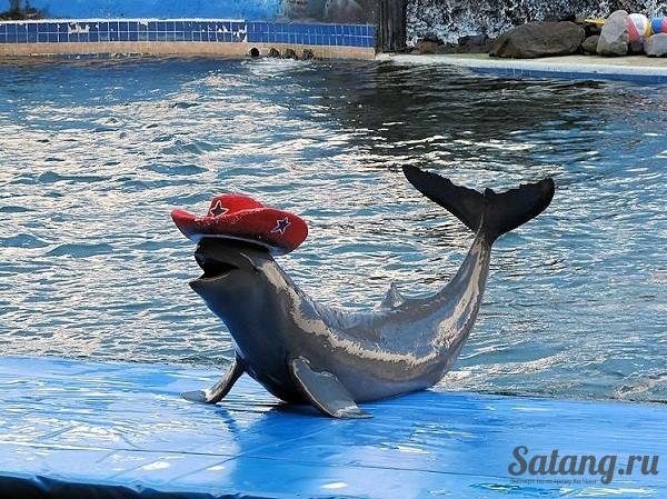Шоу дельфинов поражает особенно детей!